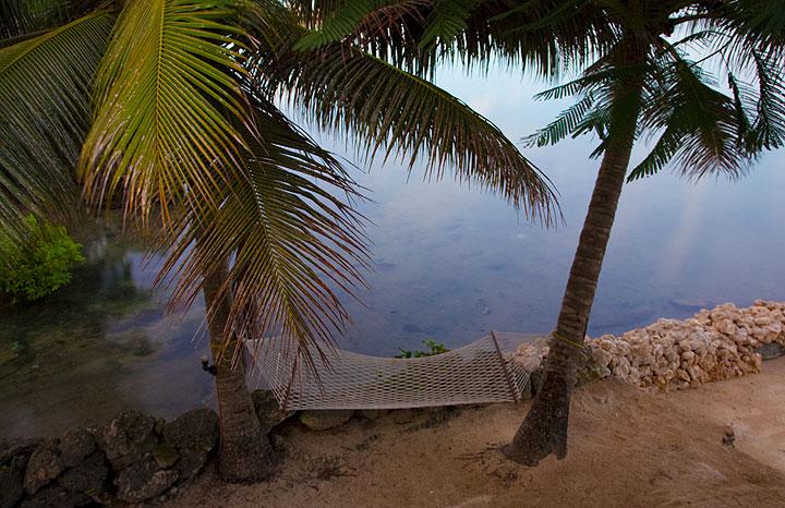 Tropical hammock (Photo: Tom Pfeiffer)