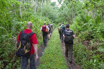 Wir beginnen die Wanderung zum Ambrym Kaldera durch den dichten Regenwald. (Photo: Tom Pfeiffer)