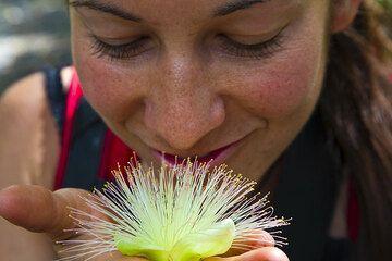 Der Duft einer Blüte (Photo: Tom Pfeiffer)