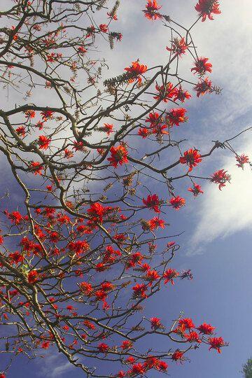 IMG_5639.jpg (Photo: Yashmin Chebli)