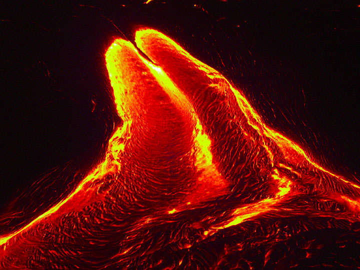 Night-time lava flow (4)