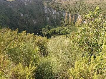 Vue à l'intérieur du cratère du Monte Nuovo (éruption de 1538)