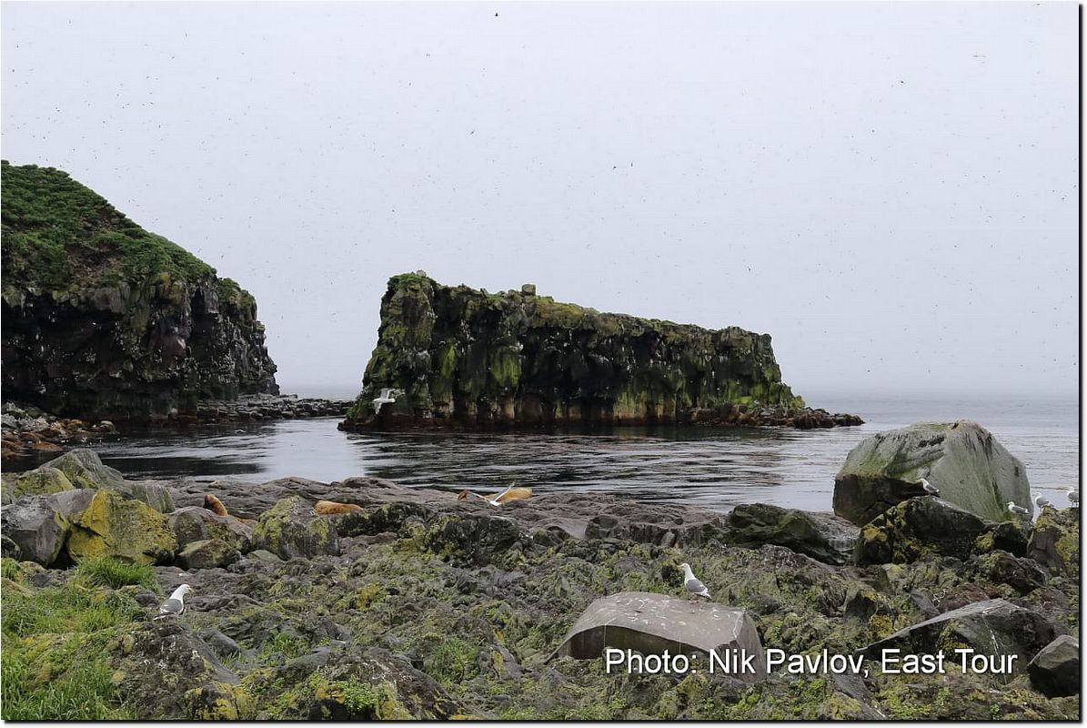 Pre-eruption view of a rocky outcrop with sea lions in the foreground.