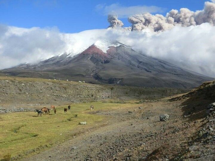 Ash emissions from Cotopaxi yesterday (photo: Patricia Mothes / IGEPN)