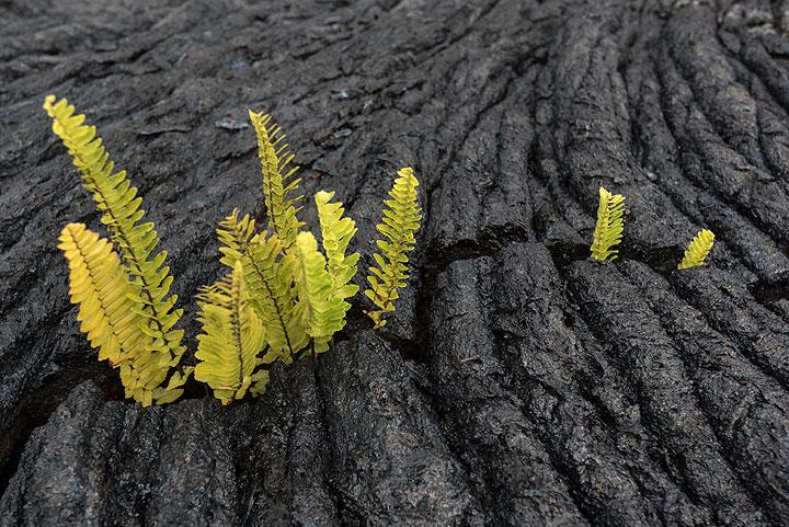 Ferns inside crack.
