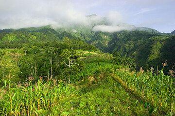 Farmland on the slopes of Merapi volcano