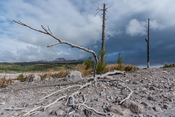 Skeletons of trees killed by pyroclastic flows about 3-5 years ago remind us that it's not a good idea to stay very long at this place.
