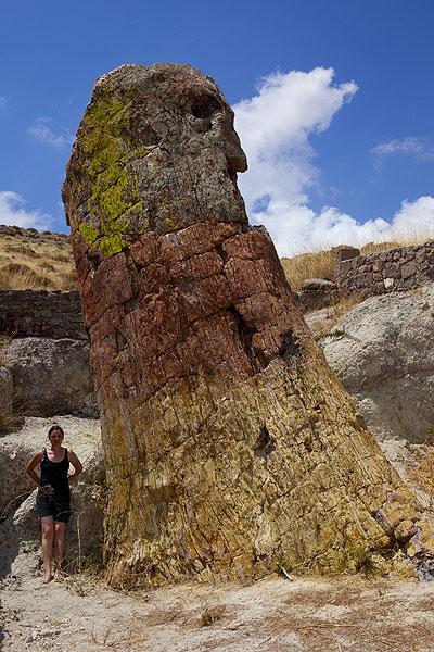 Petrified giant tree on Lesbos