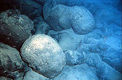 Pillow basalt from the south Pacific. (NOAA)