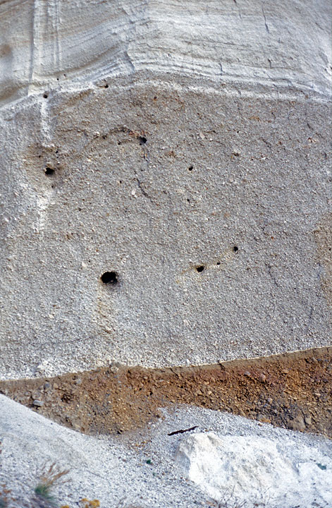 """The first photo of the site: holes in the basal pumice layer, here about 5 meters thick, where the branches of the tree were. The """"Science"""" branch was from the large hole. A piece of wood is lying on the ground..."""