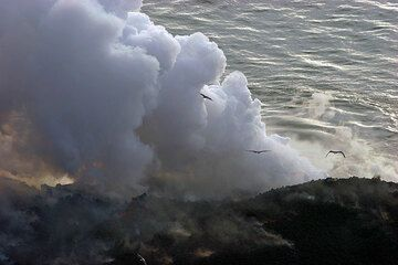 Seagulls and the steam plume