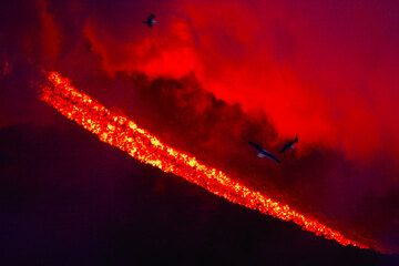 Seagulls and the lava flow.