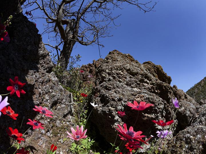 Red anemones in the crater (c) Tobias Schorr