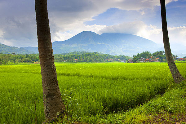 Rice field in West Java (photo: Roland Gerth)