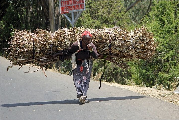 Ethiopian lady carrying a bustle of twigs up on Entoto Hill near Addis Ababa (Jay Ramji - February 2016)