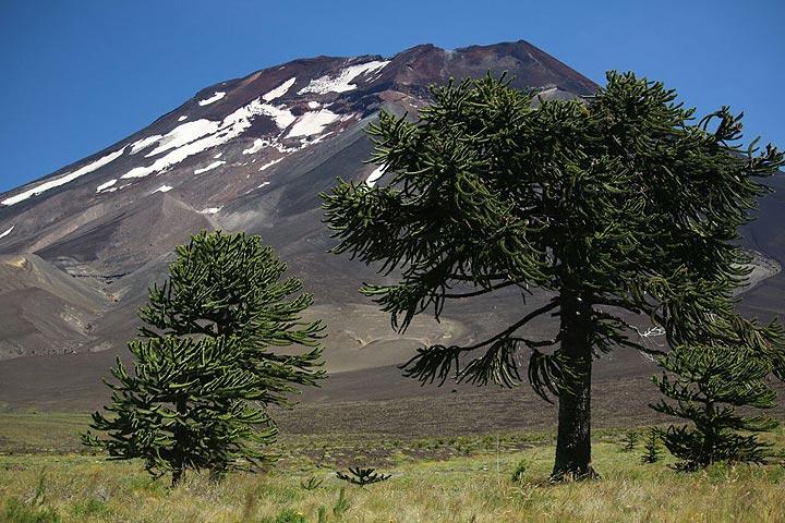 Malalcahuello National Reserve