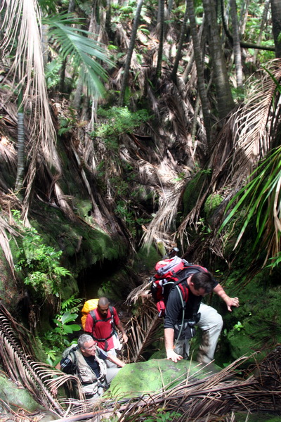 Climbing to the caldera through the rainforest