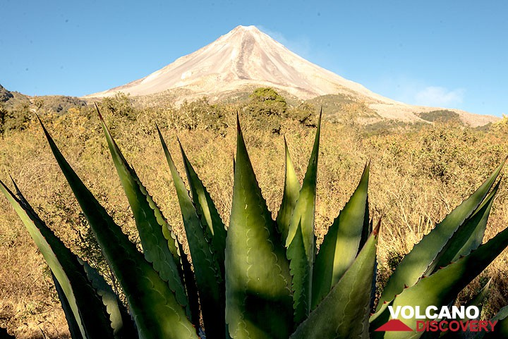 Agave and the volcano in the evening light