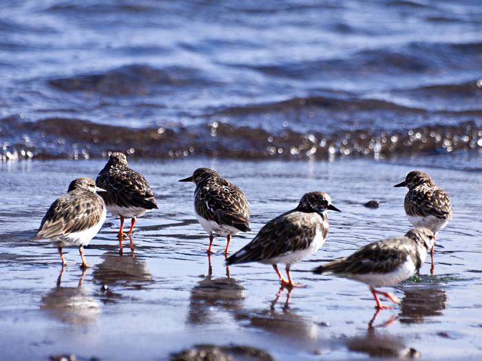 Sea birds in La Restinga/El Hierro