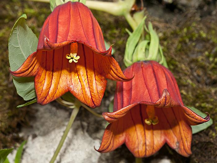 The endemic flowers at El Hierro