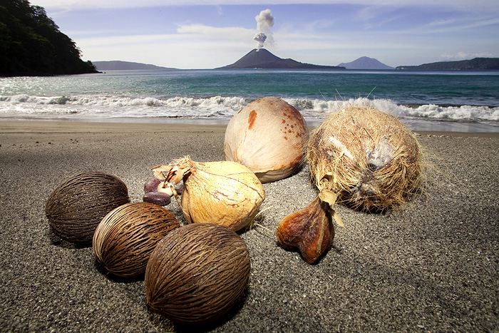 Beach at Rakata Island (Krakatau)