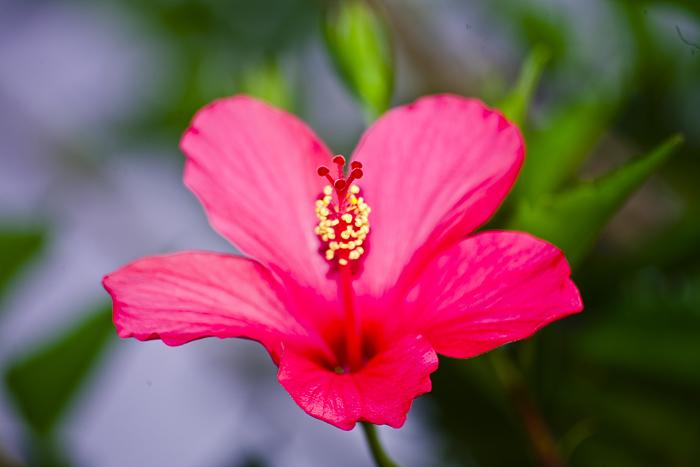 Flower on Java