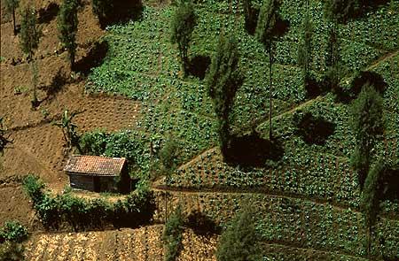Des champs d'oignon et de chou près du Semeru