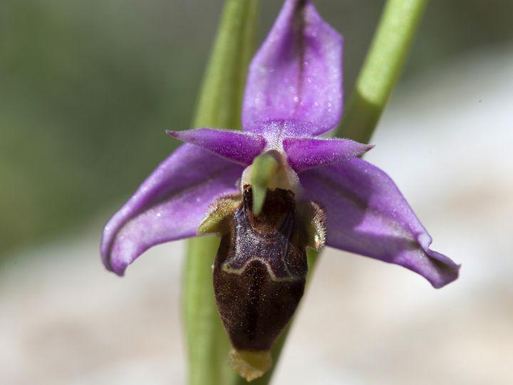 Orchid (c)Tobias Schorr