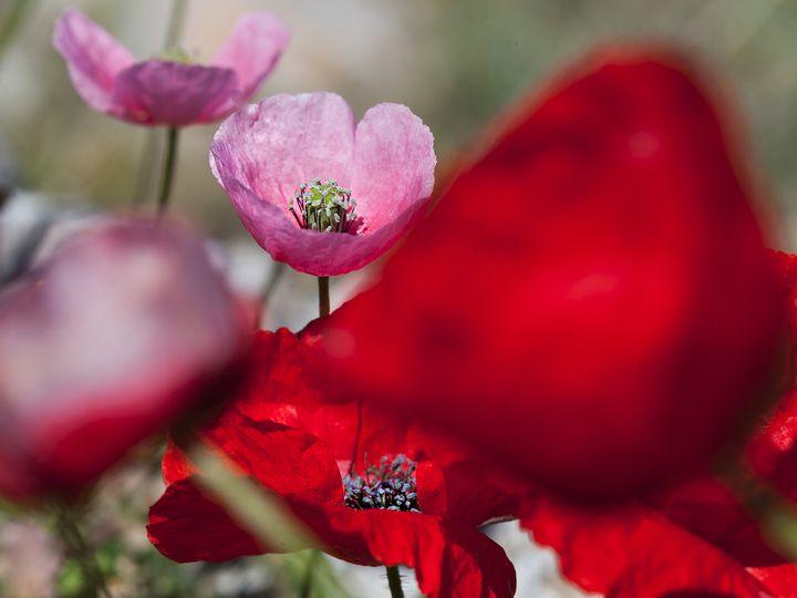 Spring flowers (c)Tobias Schorr