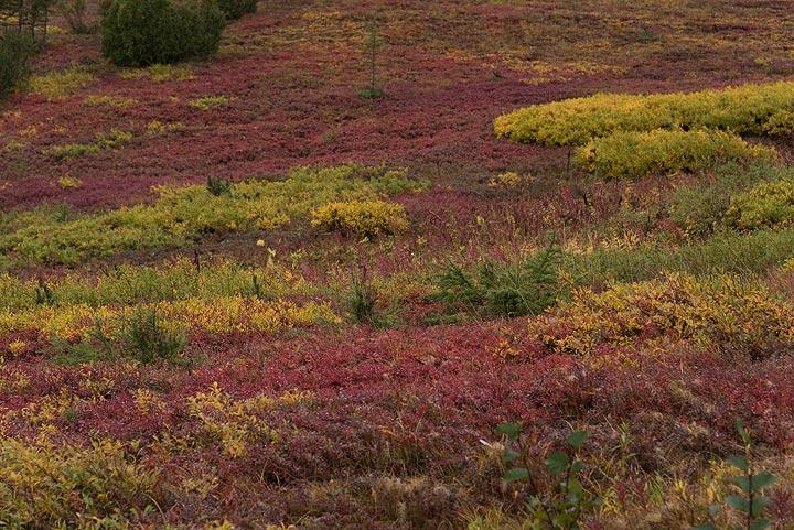 Autumn colored tundra near Tolbachik