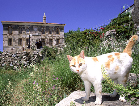 A cat at the old mosque at Kos