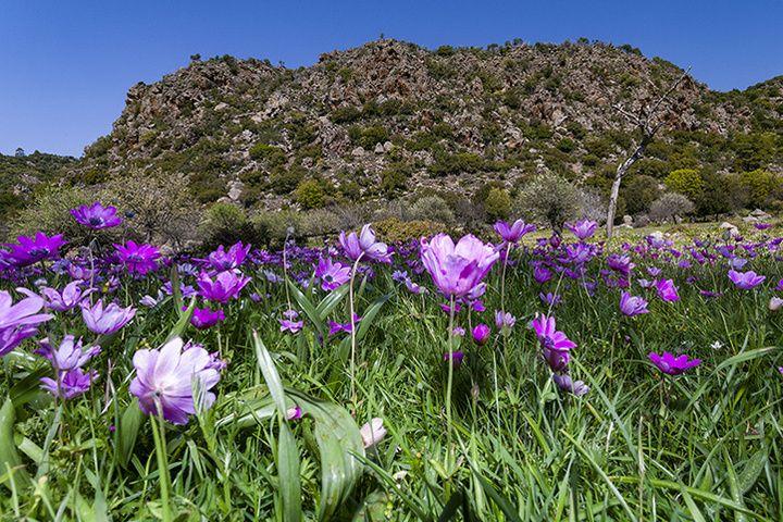 Der Lavadom Rethi am Makrylongos-Hochtal. Im Frühling ist die Ebene mit Anemonen bedeckt.