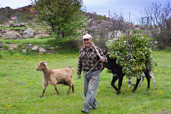 The farmer Kostas on his fields.