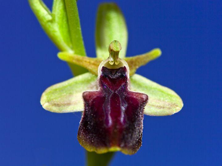 Im Frühling entdeckt man die wunderschönen Orchideen.