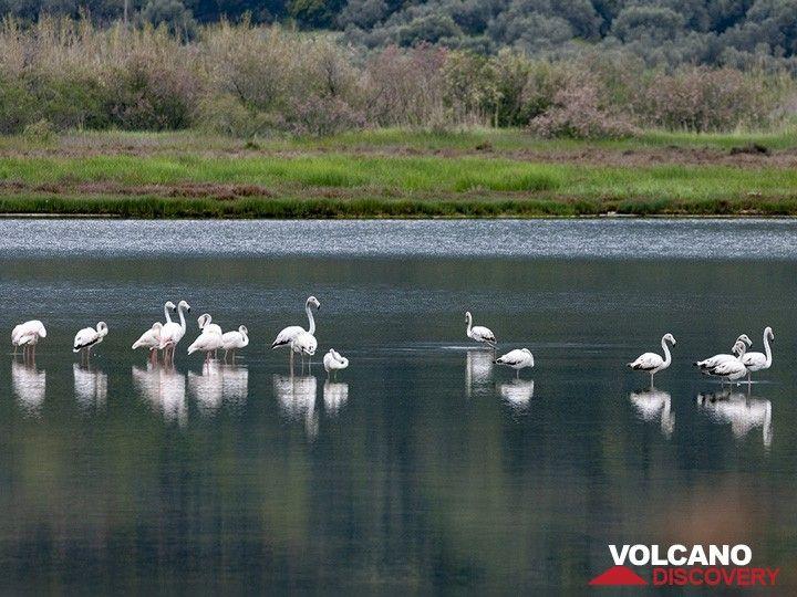 Flamingos at Lake Psifta
