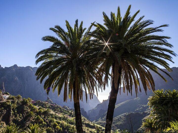 The Palms of Masca/Tenerife