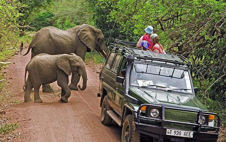 Elephants passing a safari vehicle (Lake Manyara Natl. Park)