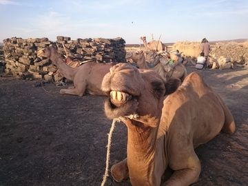 ...and one happy camel (same as I was) (image: Richard Pichl)