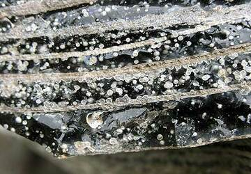 Detail of obsidian with spherolites (small bubbles where the glass has crystallized around the bubble)
