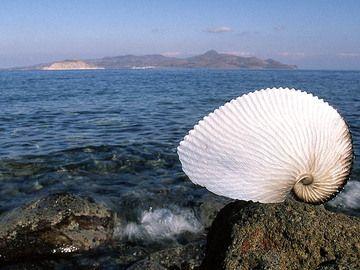 Anzeigen von Methana mit einer seltenes shell