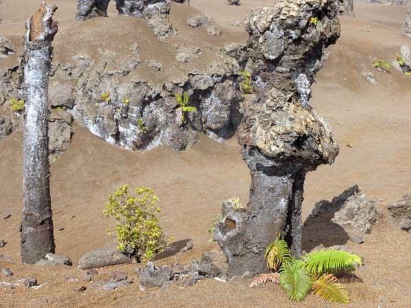 Lava Bäume auf dem östlichen Rift Zone Kilauea Vulkan, Hawaii